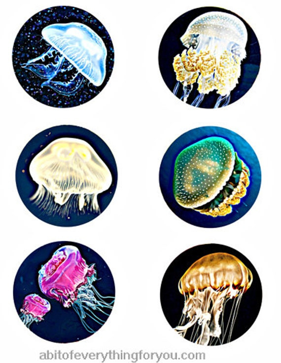 jellyfish sealife animals clip art digital download collage sheet 3 inch circles ocean beach graphics downloadable images printables