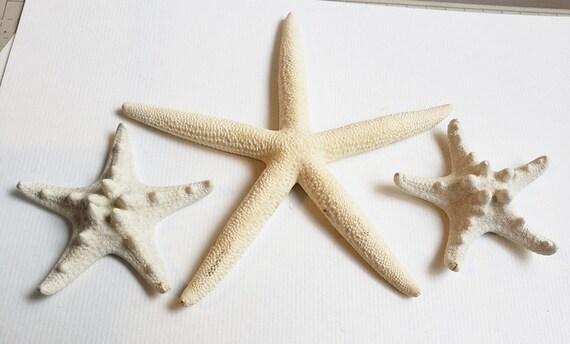 3 real starfish sea life animals beach nautrical decor diy nature craft supplies