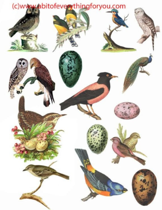vintage birds owls eggs art clipart digital download die cuts craft cut outs sheet animal nature graphics images printables