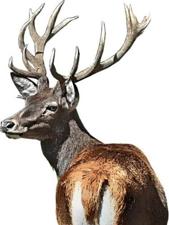 deer buck antlers skull printable animal art print clipart png download digital image graphics downloadable nature wildlife art