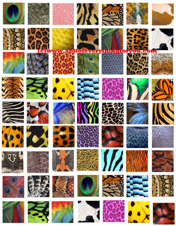 """animals insects patterns textures fur scales feathers collage sheet 1"""" inch squares pendants digital download graphics images printables"""