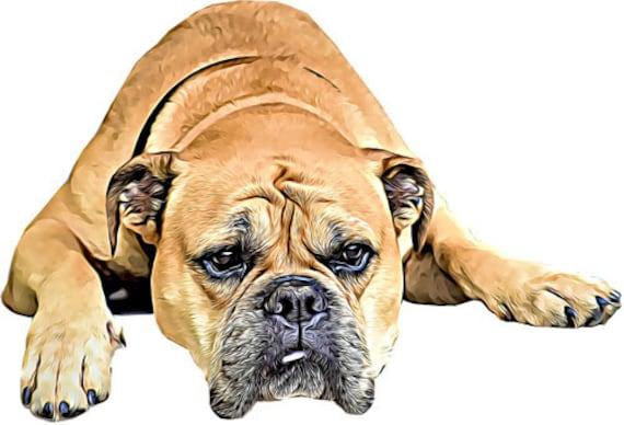 brown boxer dog head abstract art clipart png jpg printable digital download animals pets digital downloadable graphics image