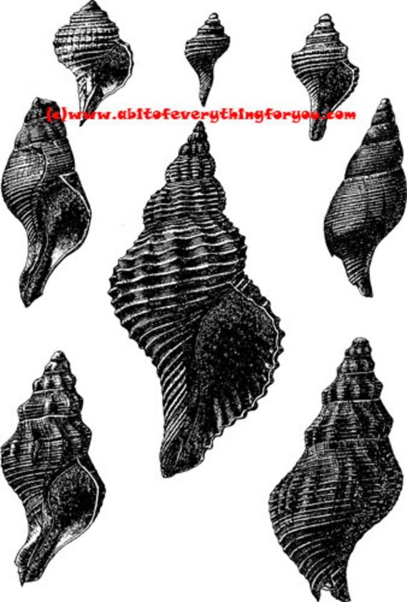 sea shells ocean beach printable art print clipart png jpg instant download digital image graphics nautical black pink blue 3 colors