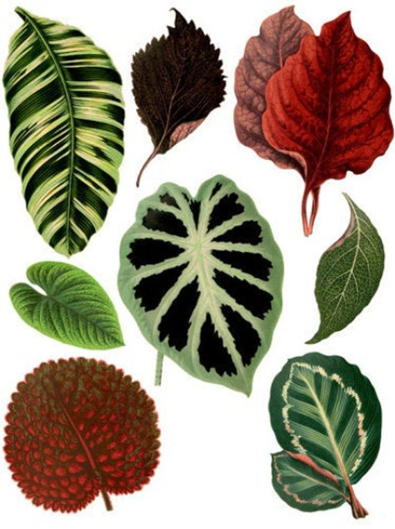 plant leaves collage sheet printable die cuts clipart digital instant download craft cut outs