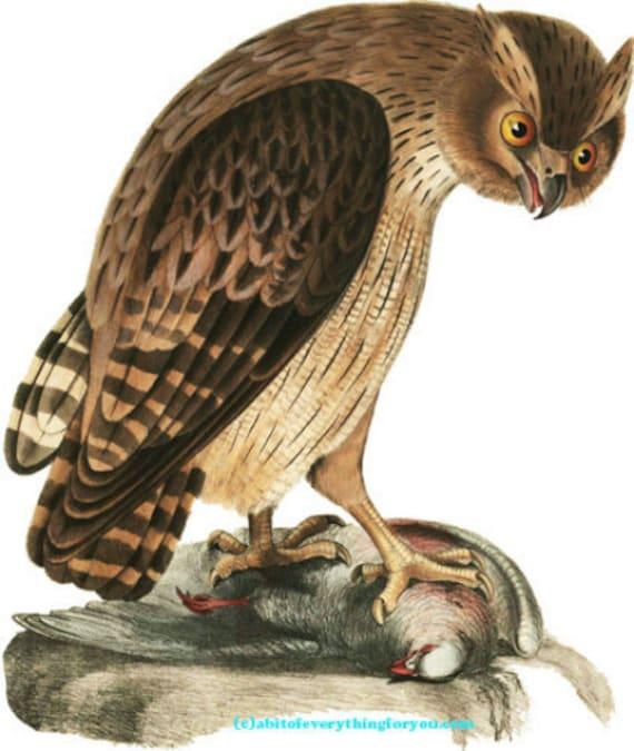 "downloadable art owl bird with prey printable art clipart png animals digital download image vintage digital art diy crafts  9"" x 10.6"""