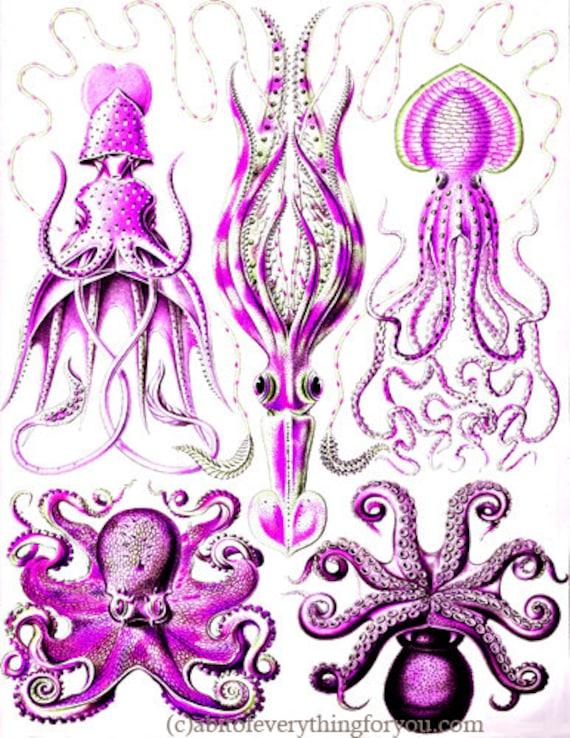"pink octopus squid sealife ocean animals art printable digital downloadable vintage image graphics nautical beach home decor 8.5"" x 11"""