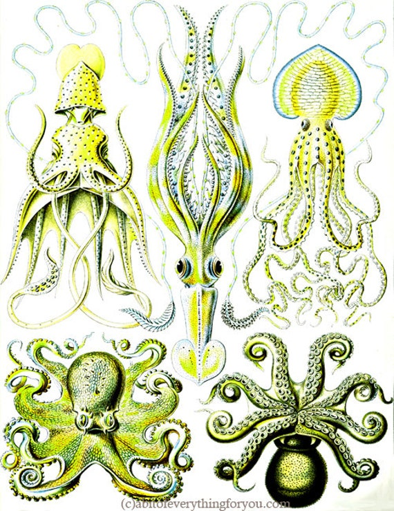 "green octopus squid sealife ocean animals art printable digital downloadable vintage image graphics nautical beach home decor 8.5"" x 11"""