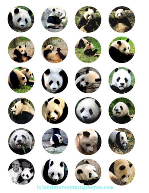 printable digital collage sheet panda bear animal pictures clipart 1.5 inch circles animal nature images pendants diy jewelry making