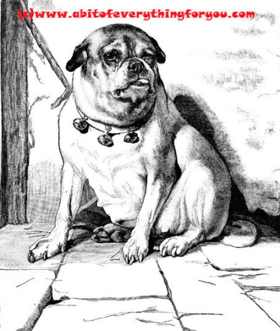 crying pug dog illustration vintage printable art print png clipart download digital image graphics pets animal black and white art