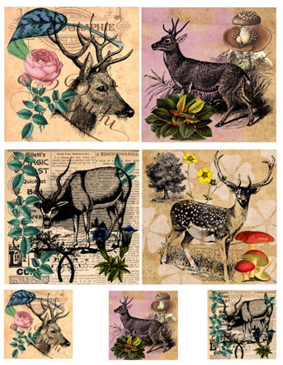 "collage sheet deer antelope animal digital instant download 4"" inch & 2"" squares graphics nature images printables diy crafts scrapbooking"