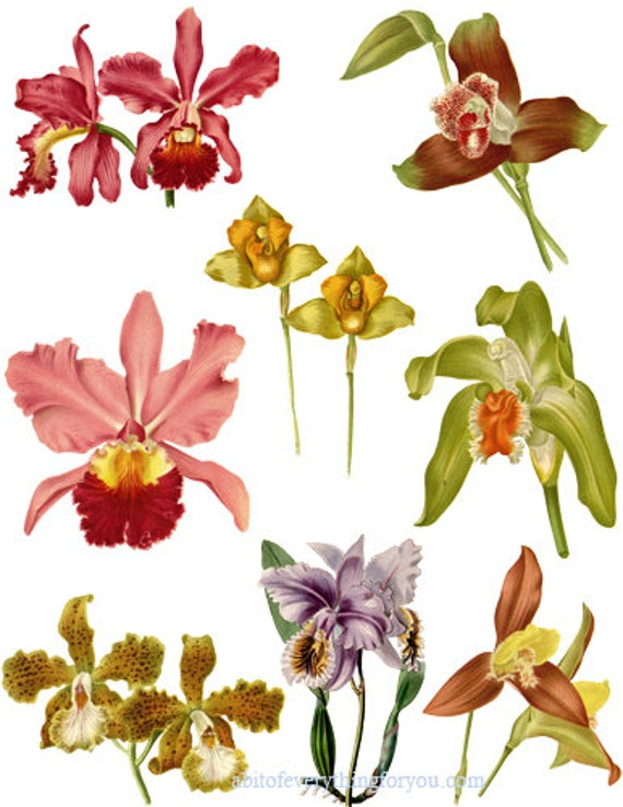 orchids flowers collage sheet printable die cuts clipart digital download floral craft cut outs nature botanical graphics images for DIY