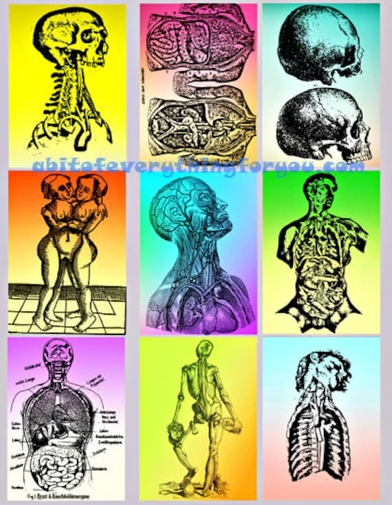 "collage sheet human anatomy art digital download 2.5"" x 3.5"" graphics downloadable images printables diy crafts aceo cards scrapbooking"