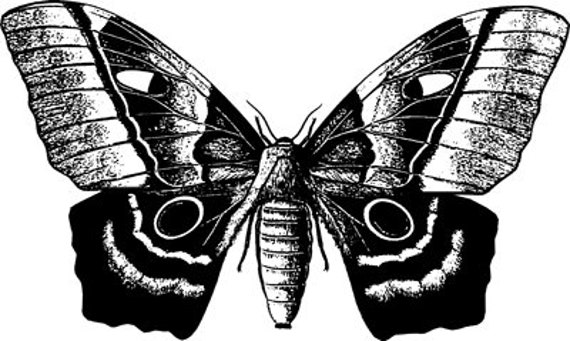 butterfly bug printable art clipart png download digital vintage insect image graphics entomology digital stamp black and white