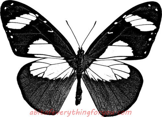 entomology butterfly insect bug printable art clipart png download digital image downloadable nature graphics digital stamp black and white