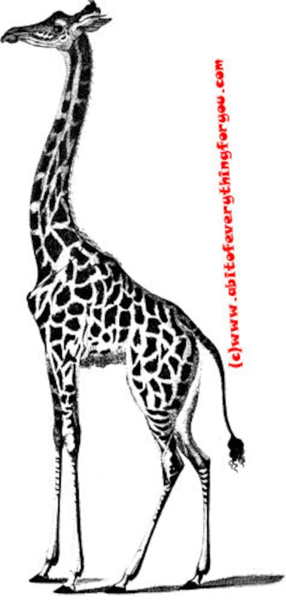 giraffe printable animal safari art printnursery kids room art digital download image graphics black & white home living room bedroom deco