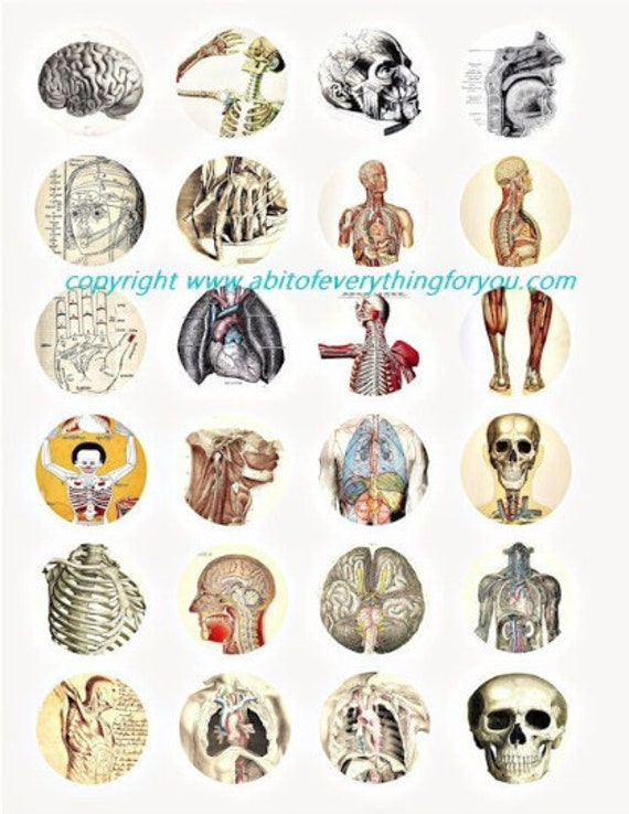 "human anatomy skulls skeletons body parts vintage clip art digital download collage sheet 1.5"" inch circles graphics images craft printables"
