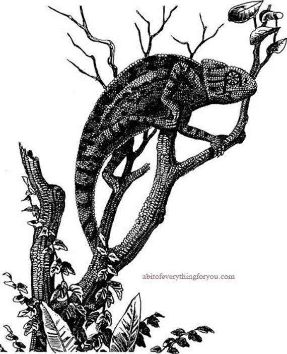 iguana on branch lizard printable art print animal clipart png download digital vintage image graphics digital stamp downloadable art