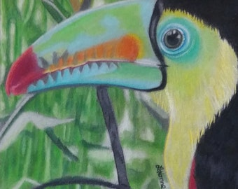 The Toucan - Original Colored Pencil Art