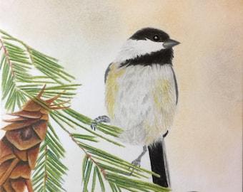 Black Capped Chickadee - Original Colored Pencil Art