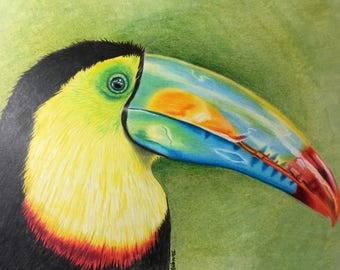 The Toucan of Destiny - Original Colored Pencil Art