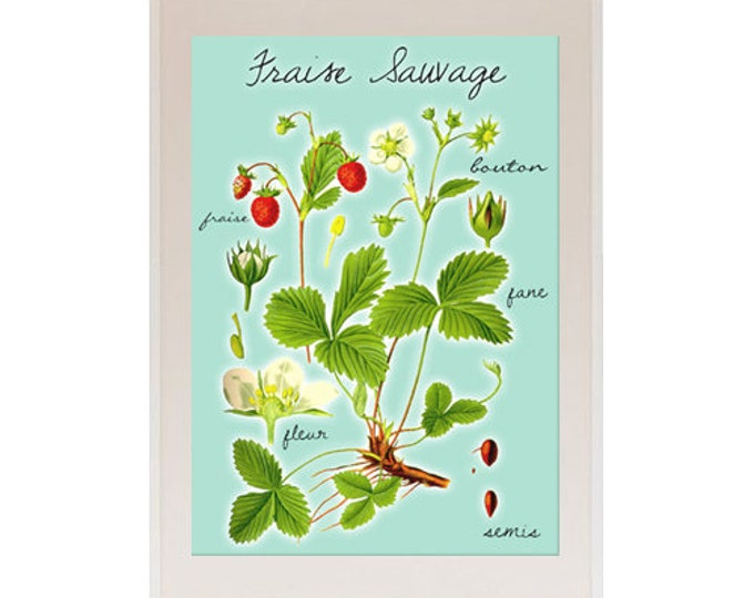 New A3 Strawberry posters for the kitchen