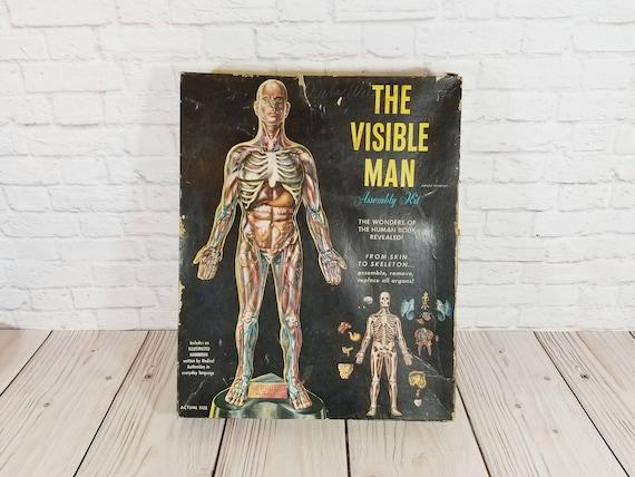 Vintage The Visible Man Human Anatomy Model Renwal Etsy