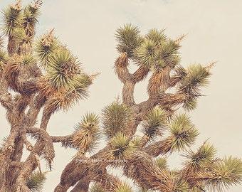 Joshua Tree print, desert picture, boho wall art, southwestern decor, yucca tree photograph, Palm Springs, green, brown, botanical photo