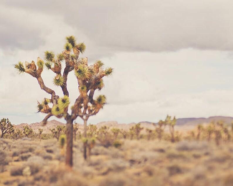 Desert Print, Joshua Tree Photo, California Landscape Art, Boho Decor,  Southwestern, Baby Nursery, Wedding Gift