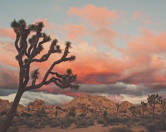 large Joshua Tree photograph, desert sunset poster, large wall art, bedroom, California baby nursery art, desert print, autumn decor, 40x60