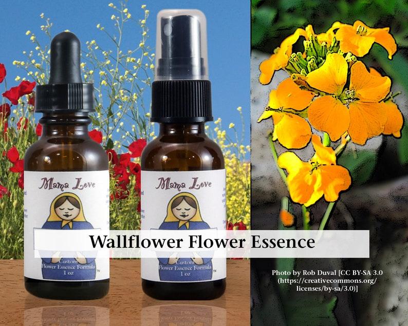 Wallflower Flower Essence 1 or 2 oz Dropper or Spray Aura image 0
