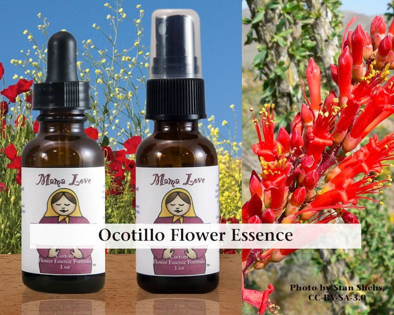 Ocotillo Flower Essence Dropper or Spray for Grounding and image 0