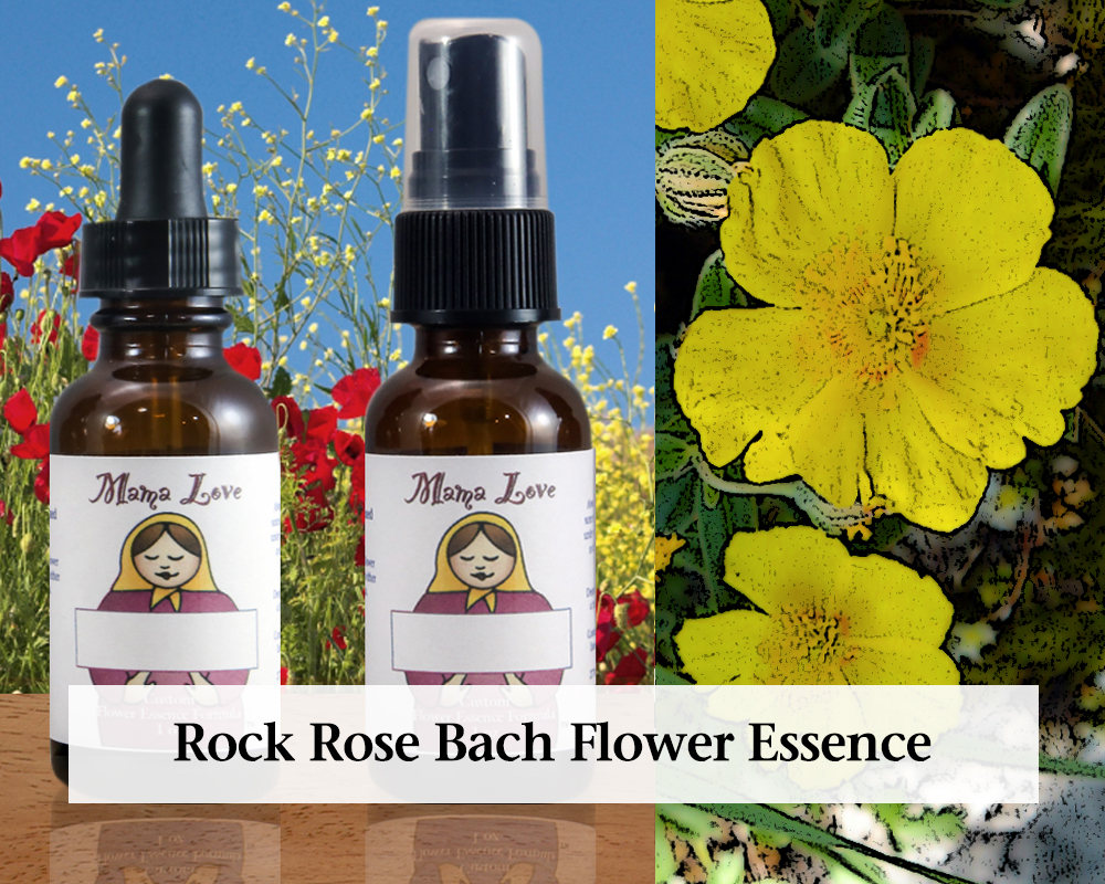 Rock Rose Bach Flower Essence Dropper Or Spray For Calm And Etsy