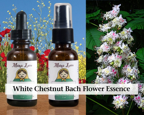White Chestnut Bach Flower Essence 1 Or 2 Oz Dropper Or Spray Etsy