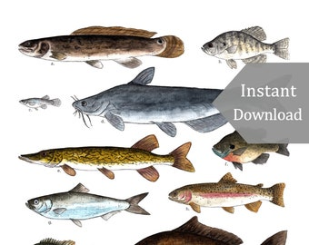 DIGITAL Poster Download - A Few Freshwater Fish - 12 x 18 - 11 x 17 - Printable Nature Art, Charlotte Mason, Montessori, Educational