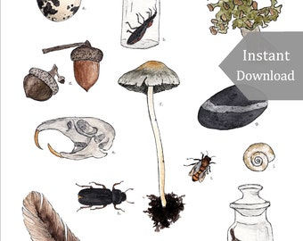 DIGITAL Poster Download - Gathered Treasures - 12 x 18 - 11 x 17 - Montessori, Educational, Natural History, Nature Study