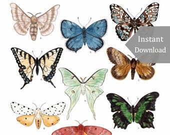 DIGITAL Poster Download - Butterflies & Moths - 12 x 18 or 11 x 17 - Printable Nature Art, Charlotte Mason, Montessori, Educational