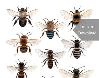 DIGITAL Poster Download - A Collection of Bees - 12 x 18 or 11 x 17 - Native Bees, Montessori, Educational, Insects, Nature Study