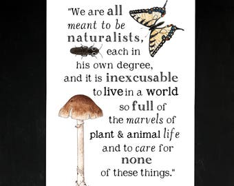 Meant to be Naturalists - Charlotte Mason Quote - 11 x 17 Poster - Educational, Natural History, Nature Study, School Room Wall Art