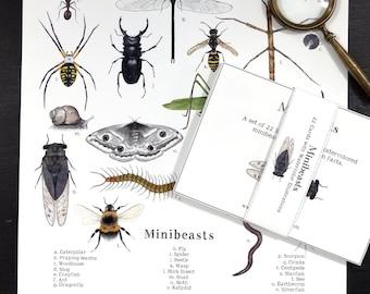 Minibeast Digital Bundle! - Minibeast Digital Print + Learning Cards - Assorted Invertebrates, Montessori, Science, Insects, Nature Study