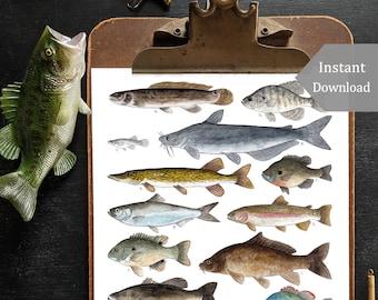 A Few Freshwater Fish Digital Print - 8.5 x 11 and A4