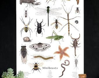 Assorted Minibeasts - Invertebrates  - School Room Wall Art - 12 x 18 Poster - Montessori, Educational, Nature Study, Entomology