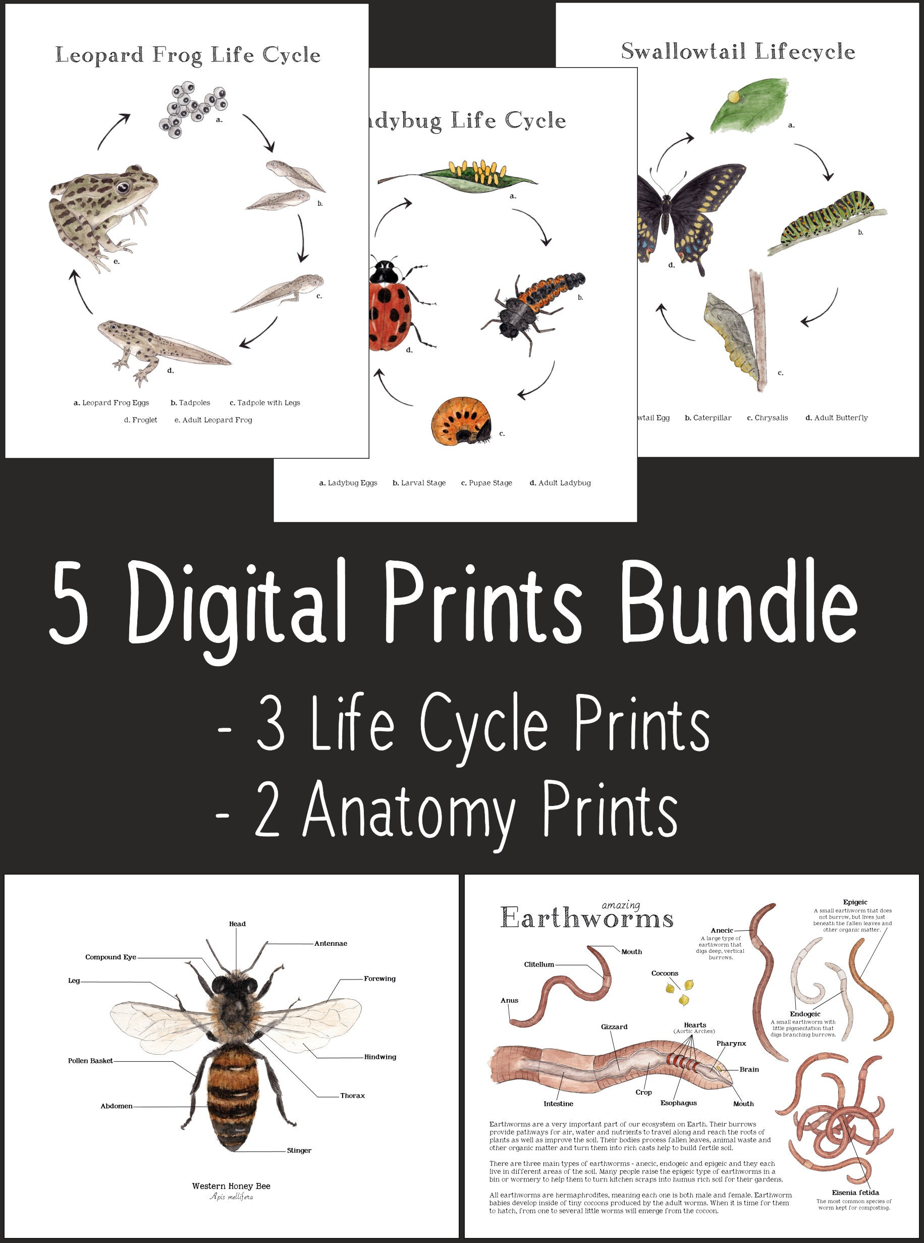 5 Sets Nature Art Printable Life Cycle Prints Anatomy   Etsy