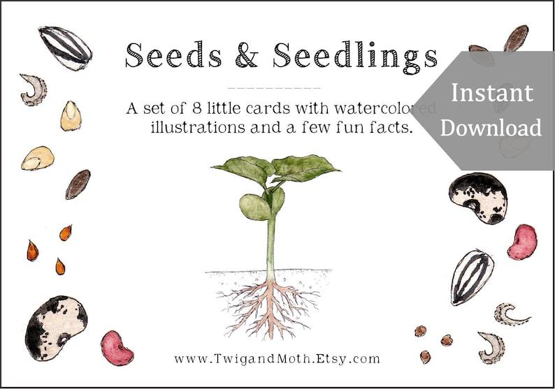 Seeds and Seedlings  Cards  Digital  Printable PDF image 0