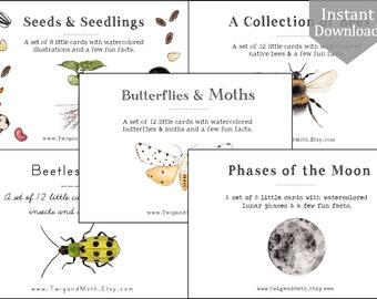 5 Sets -  Digital Learning Card Bundle - Charlotte Mason, Montessori, Homeschool, Nature Cards, Bees, Beetles, Moths, Seeds, Moon