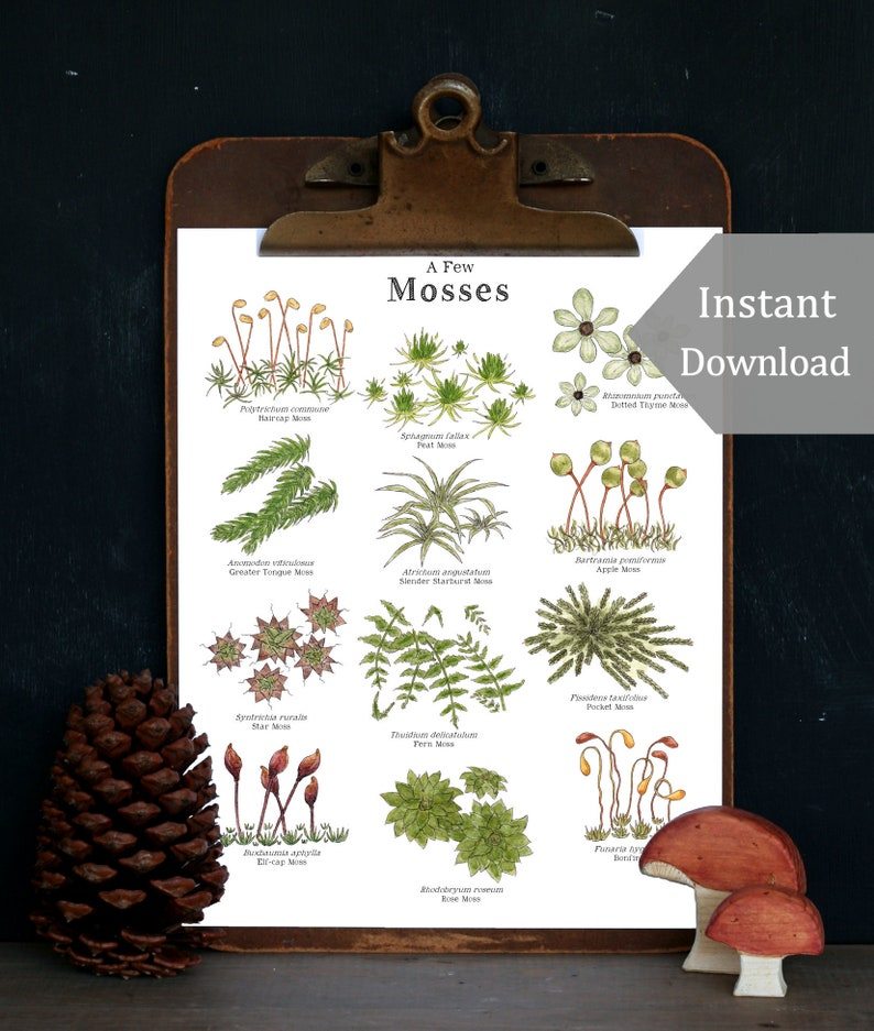 Lichens & Mosses  Educational Art Print 8.5x11 and A4 Sized image 0