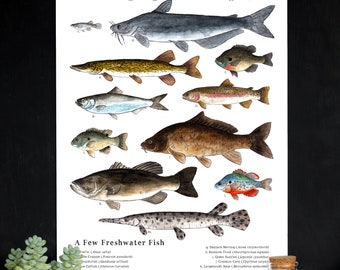 Nature Art Poster - A Few Freshwater Fish - 12 x 18 Poster -  Schoolroom Art, Science, Natural History, Nature Study