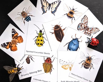 Three Part Cards - Bees, butterflies, Moths and Beetles - Montessori Science - Editable Files