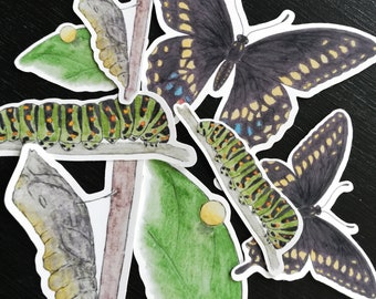 Swallowtail Butterfly Life Cycle Stickers