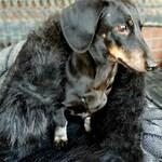Warm Pet Bed - Pet Sleeping Bag - Cave Bed - Burrow Bed - Dachshund Burrowing Bed - Snuggle Sack - Fleece Dog Blanket - Sleep Sack - Cat Bed