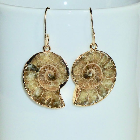 Ammonite Fossil Earrings on Gold Filled Earwires